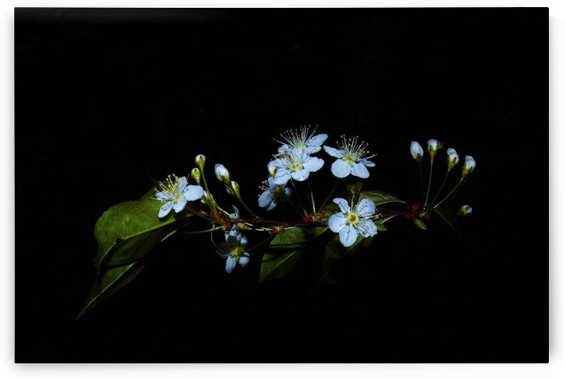 Apesanteur by Annie St-Pierre Artiste Photographie