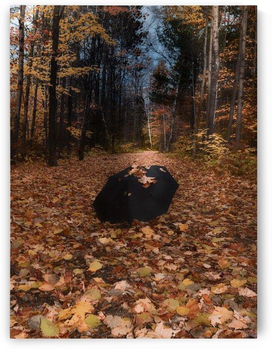 Tapis de feuille by Annie St-Pierre Photographie Artiste Photographe