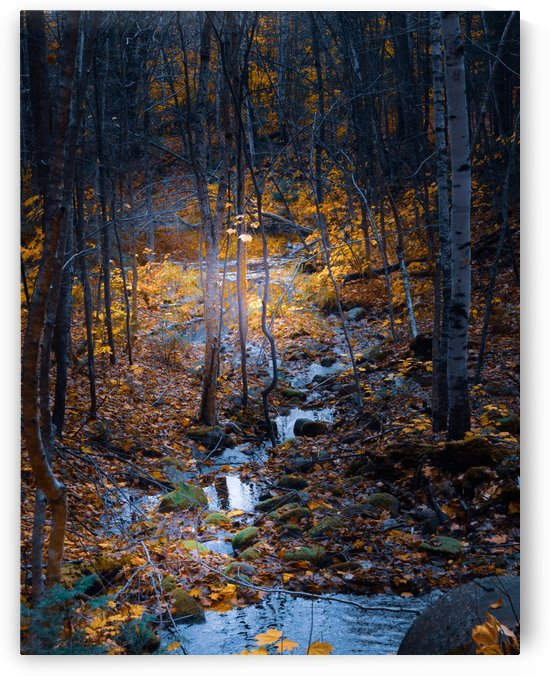 Ruisseau by Annie St-Pierre Photographie Artiste Photographe