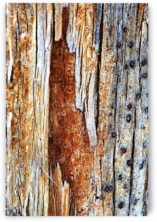 Eucalyptus Textures and Tones by Joy Watson