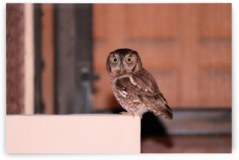 owl by US JOHN