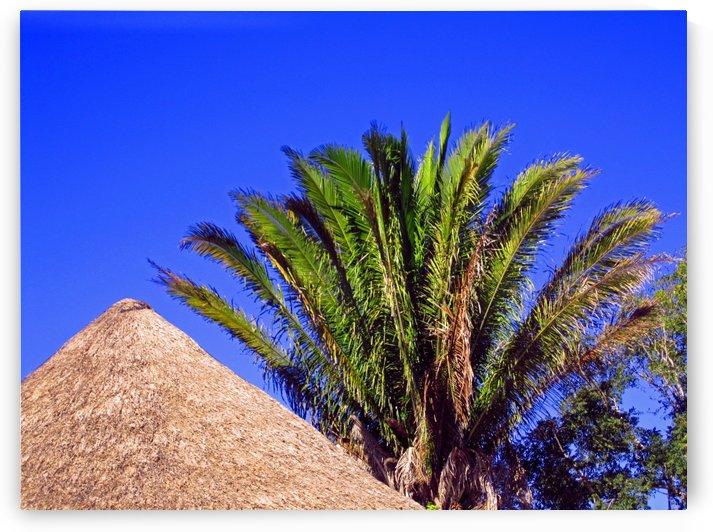 Palm and Cabana by Gods Eye Candy