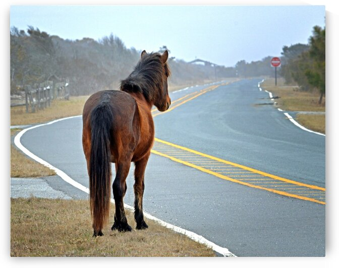 Delegates Pride Awaiting Assateague Island Tourists by Bill Swartwout Photography