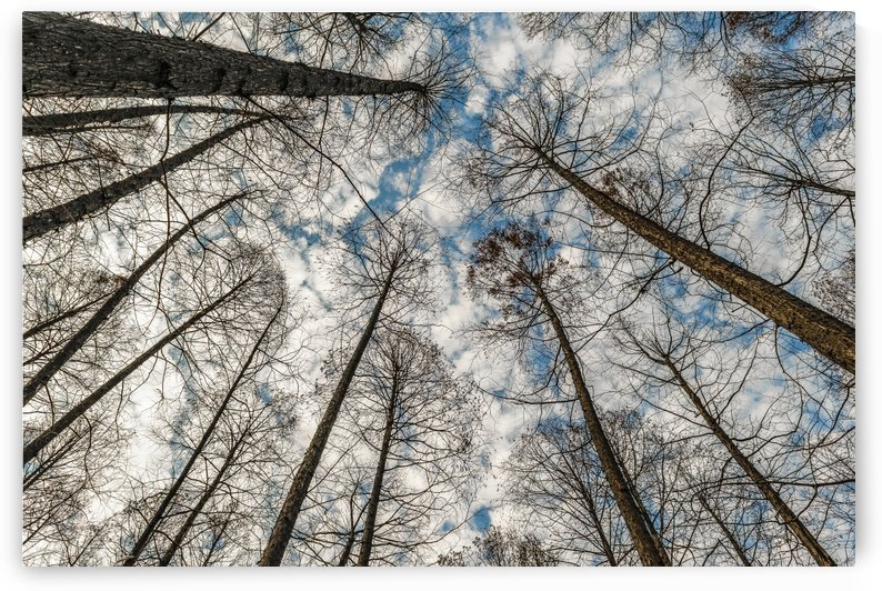 Low Angle Big Trees, West Lake, Hangzhou, China by Daniel Ferreia Leites Ciccarino