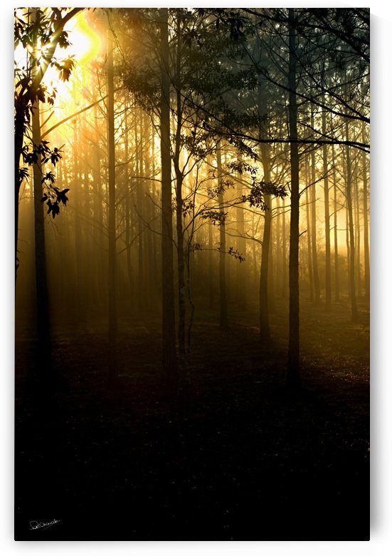 Mississippi Pine Sunrise by Shadow and Form