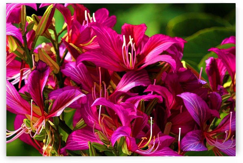 Hong Kong Orchid by HH Photography of Florida