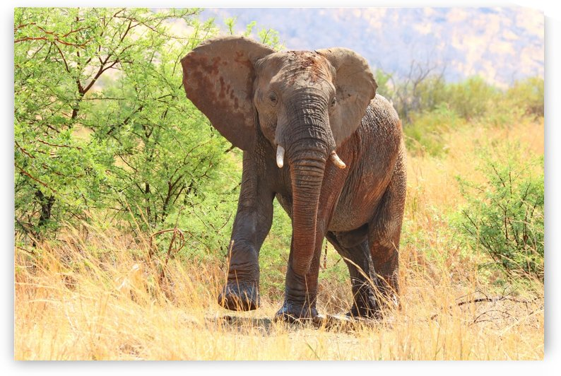 Elephant Bull 2722 by Thula-Photography