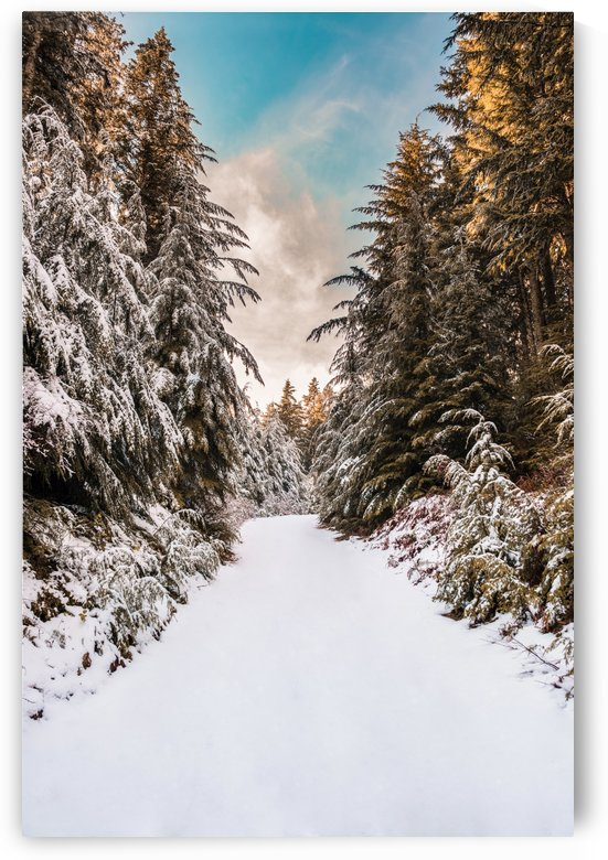 FrozenAlley by Cameron Grey