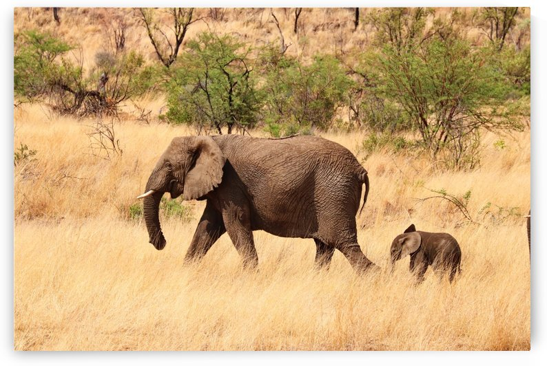 Elephant Mother with Baby 2945 by Thula-Photography