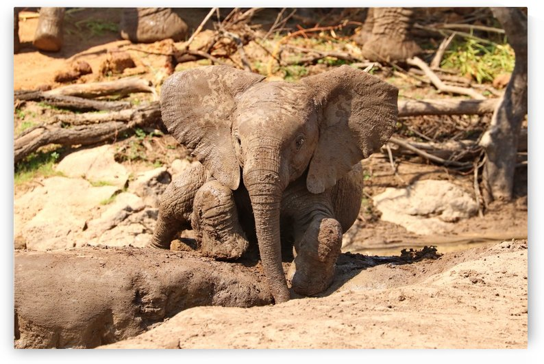 Baby Elephant 2928 by Thula-Photography