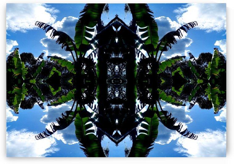 natural 3 by Carlos Manzcera