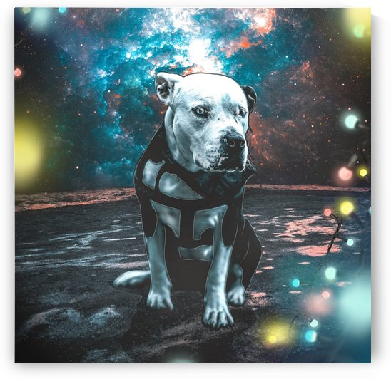 cosmos background space dog by Shamudy