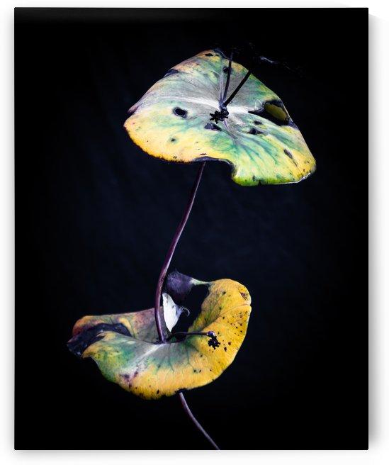 Nature Morte 1 by Michel W Boyer