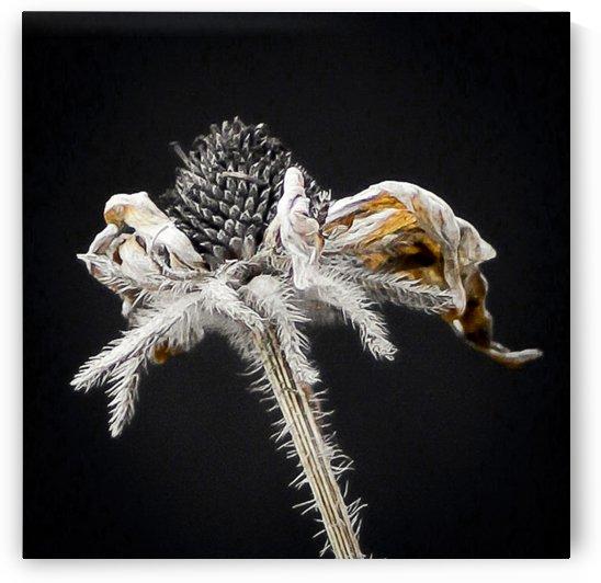 Nature Morte 5 by Michel W Boyer