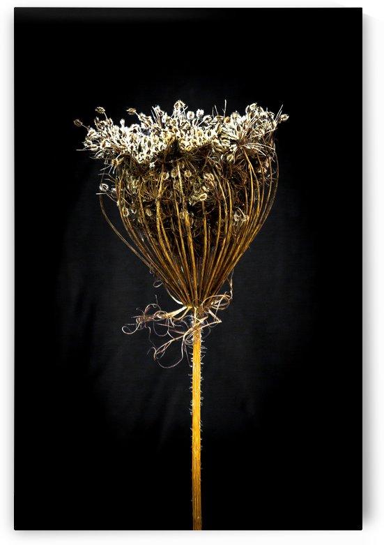 Nature Morte 6 by Michel W Boyer