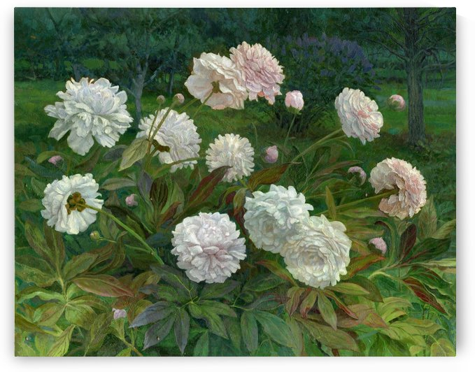 Peonies by Egalitarian Art Gallery