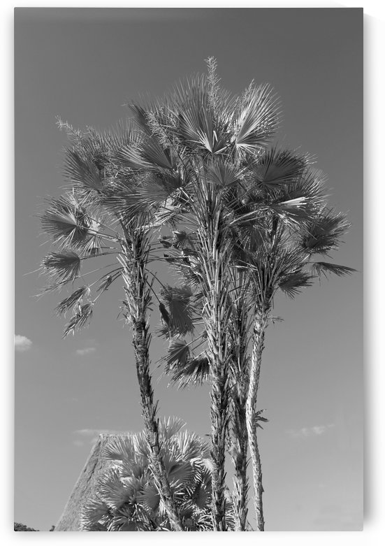 Growing to the Sky B&W by Gods Eye Candy