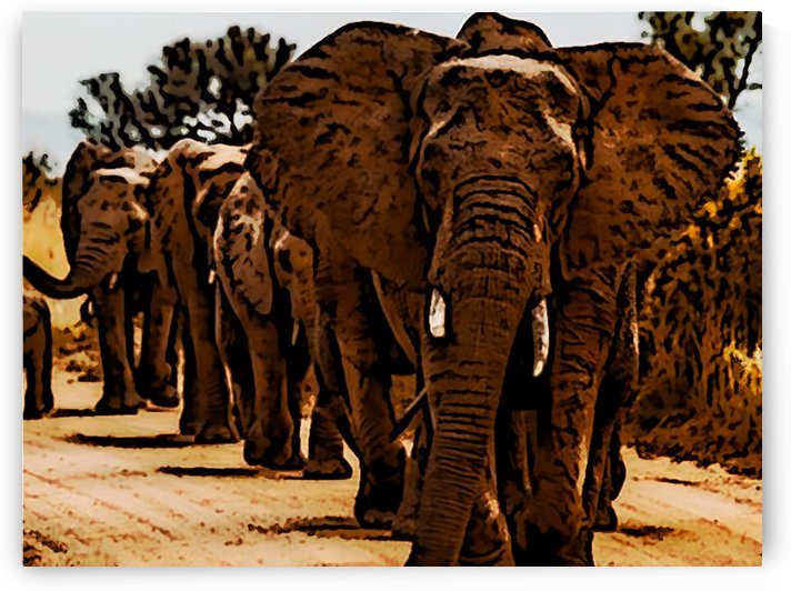 Elephants Marching by W Scott