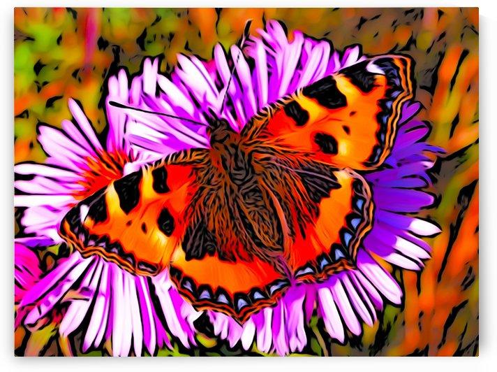 Butterfly by W Scott