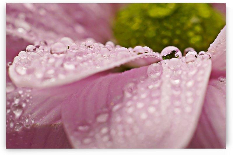 Flower in the rain by Tony Doyle
