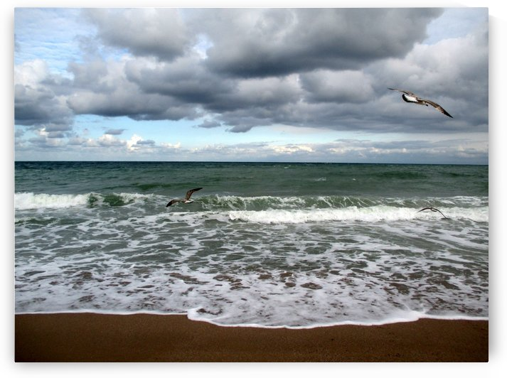 A sense of freedom by the beach by Crystalline