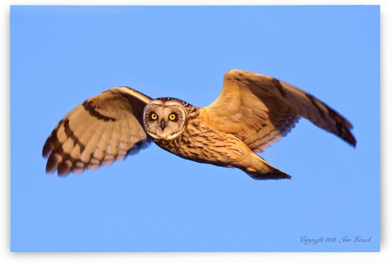 Owls by Jim Zenock
