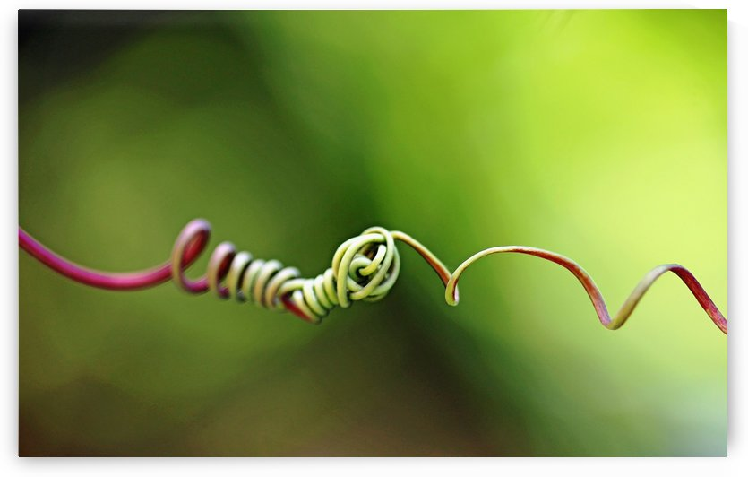 Knotted I by Deb Oppermann