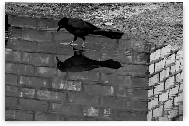 Brick and Bird by H.Hart Photography