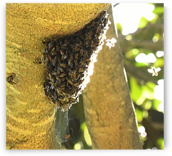 Bee Hive by H.Hart Photography