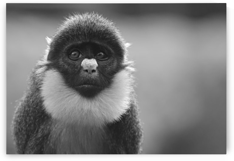 Monkey Eyes by H.Hart Photography