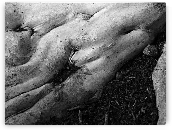 Natural Bodies by H.Hart Photography