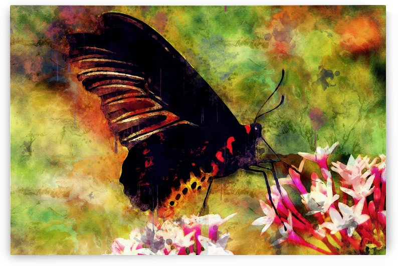 Happy Butterfly by Erin Mac