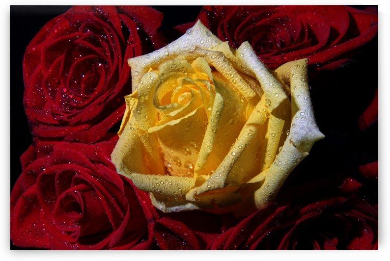 bouquet de roses by Denis Brien