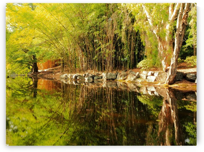 Golden_Bamboo_Grove_Afternoon_Pond_Reflections by Michaela Scherr