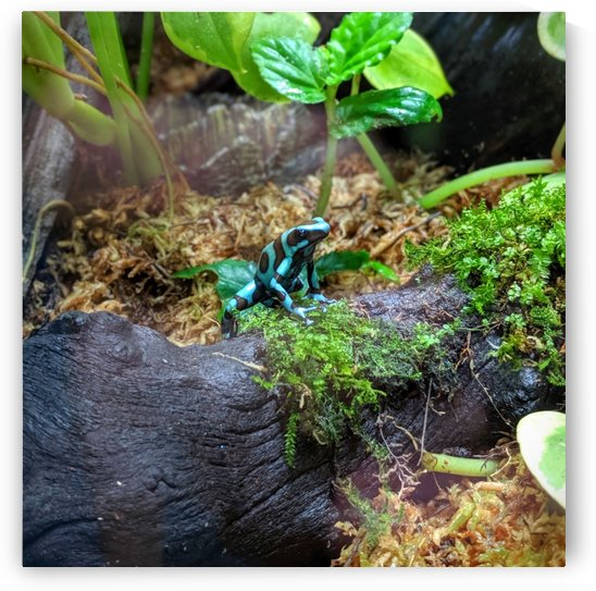 Blue frog by Michael Geyer