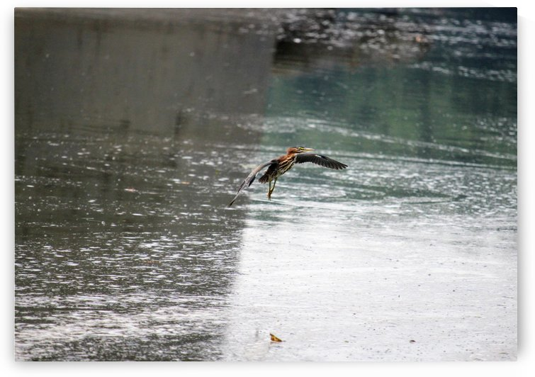 Bird flying against a river by Michael Geyer