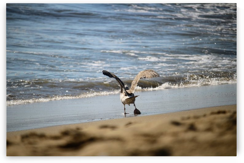 Seagull at the beach by Michael Geyer