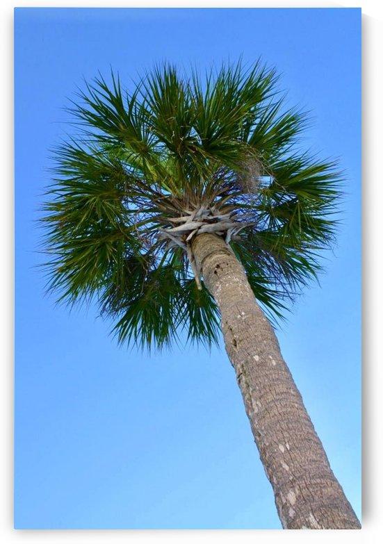 Palm tree by A_B_Goddess Photography