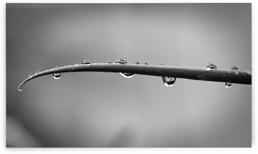In the Rain by H.Hart Photography