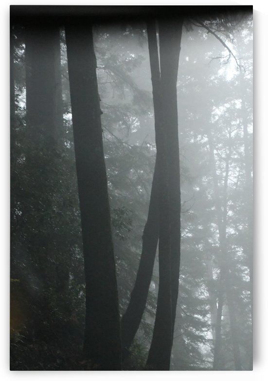 Trees in the Mist by H.Hart Photography