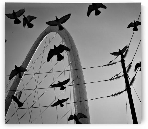 Tijuana Pigeons by H.Hart Photography