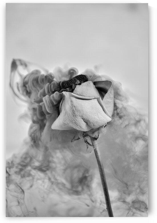 Nostalgie by Annie St-Pierre Photographie Artiste Photographe