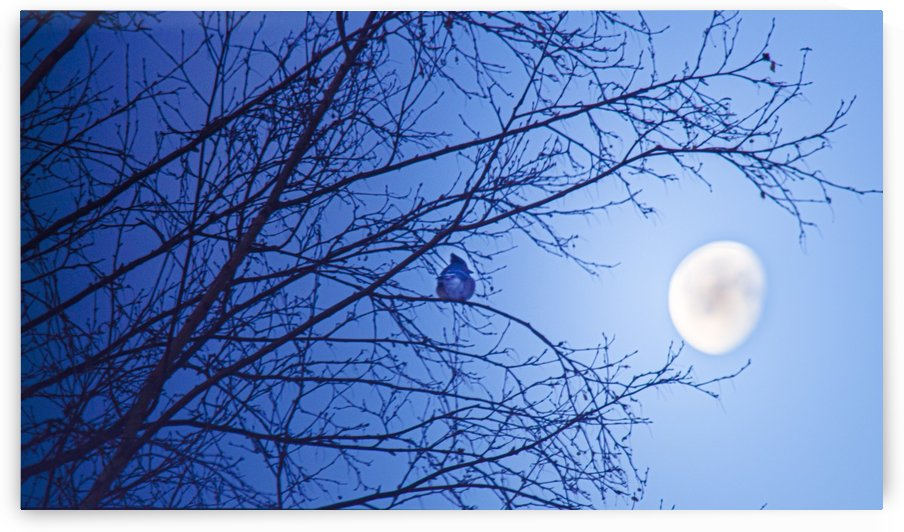 Soleil levant by Annie St-Pierre Artiste Photographie