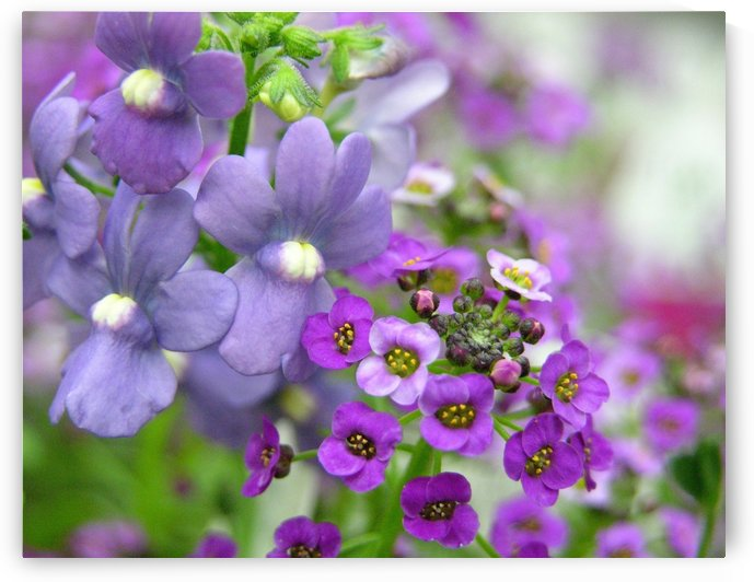 Purple Flower Photography by Katherine Lindsey Photography