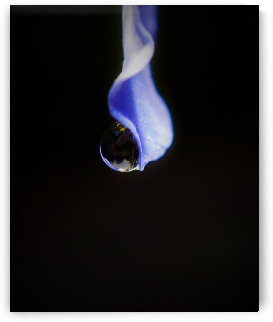 Pendule by Annie St-Pierre Photographie