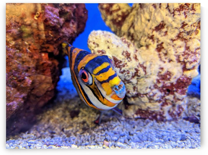 Fish peering out from a stone formation by Michael Geyer