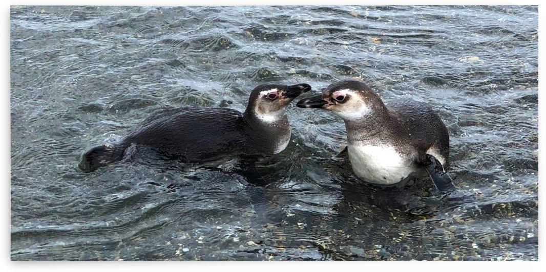 Ushuaia Baby Penguins by Creative Endeavors - Steven Oscherwitz