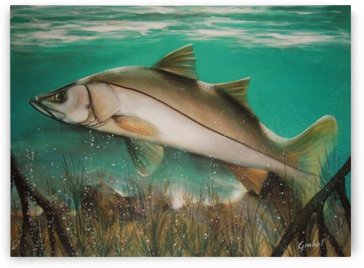 snook by Bill Gimbel