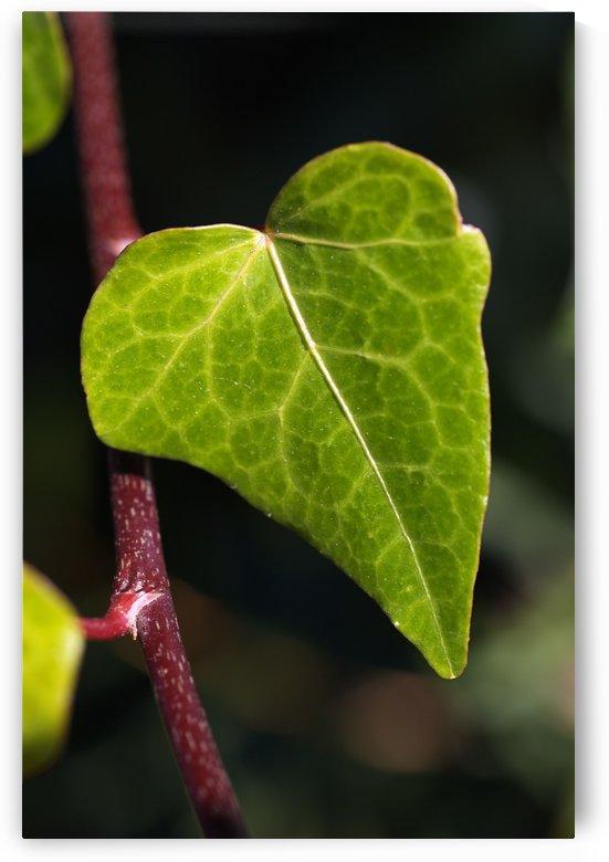 Leaf Heart by Joy Watson