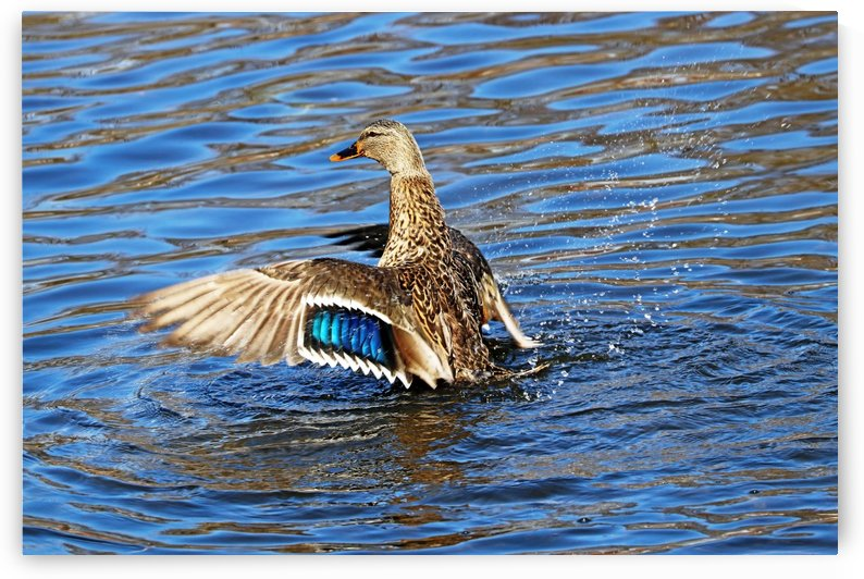 Flaunting The Blues by Deb Oppermann